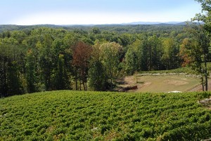 Our vineyard is situated on top of Wolf Mountain at an 1,800 foot elevation, presenting a truly unique viticultural site.